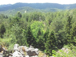 Το Δάσος στους Καταρράκτε του Δρυμώνα