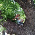 2018-04-28 παδί πάνω σε δέντρο στη παιδική χαρά του Αγ. Νικολάου