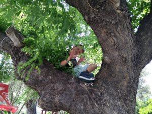 2018-04-28 παδί πάνω σε δέντρο στη παιδική χαρά του Αγ. Νικολάου Χαλκίδα